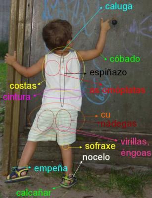 20090625194130-partes-do-corpo-3.jpg
