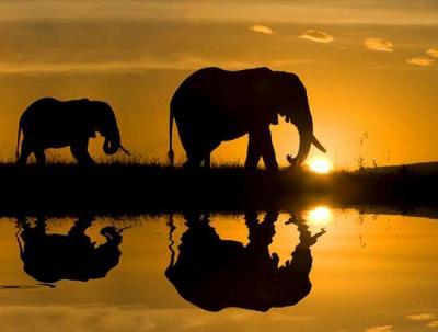 20100531184553-africa.jpg