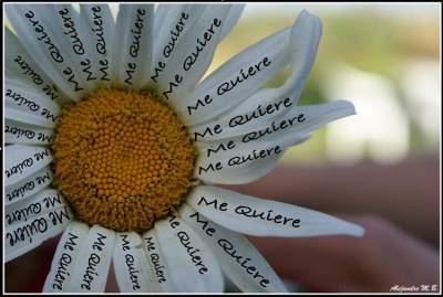 20111018202210-normal-margarita-me-quiere2.jpg
